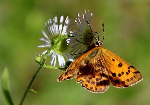 этюд с ромашкой и бабочкой