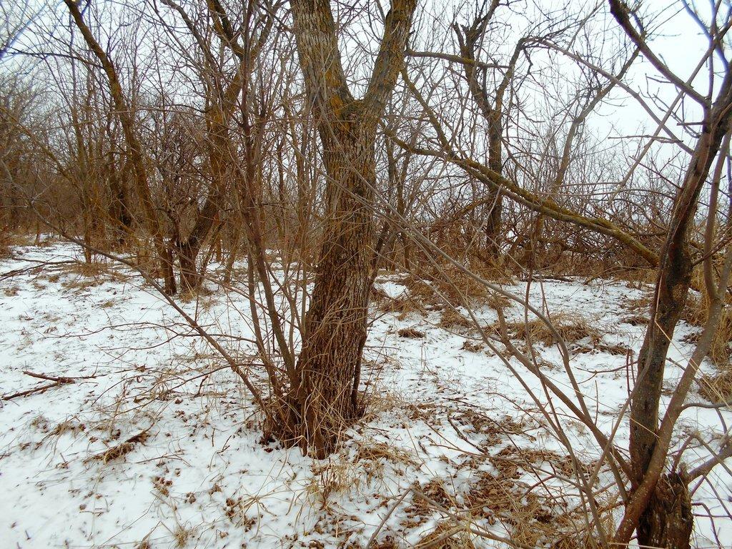 Зима, в походе пешем, февраль, Азовское побережье... 002. 009