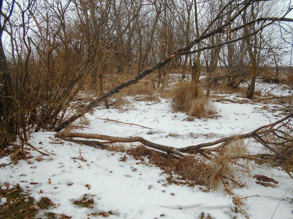 Зима, в походе пешем, февраль, Азовское побережье... 002. 006
