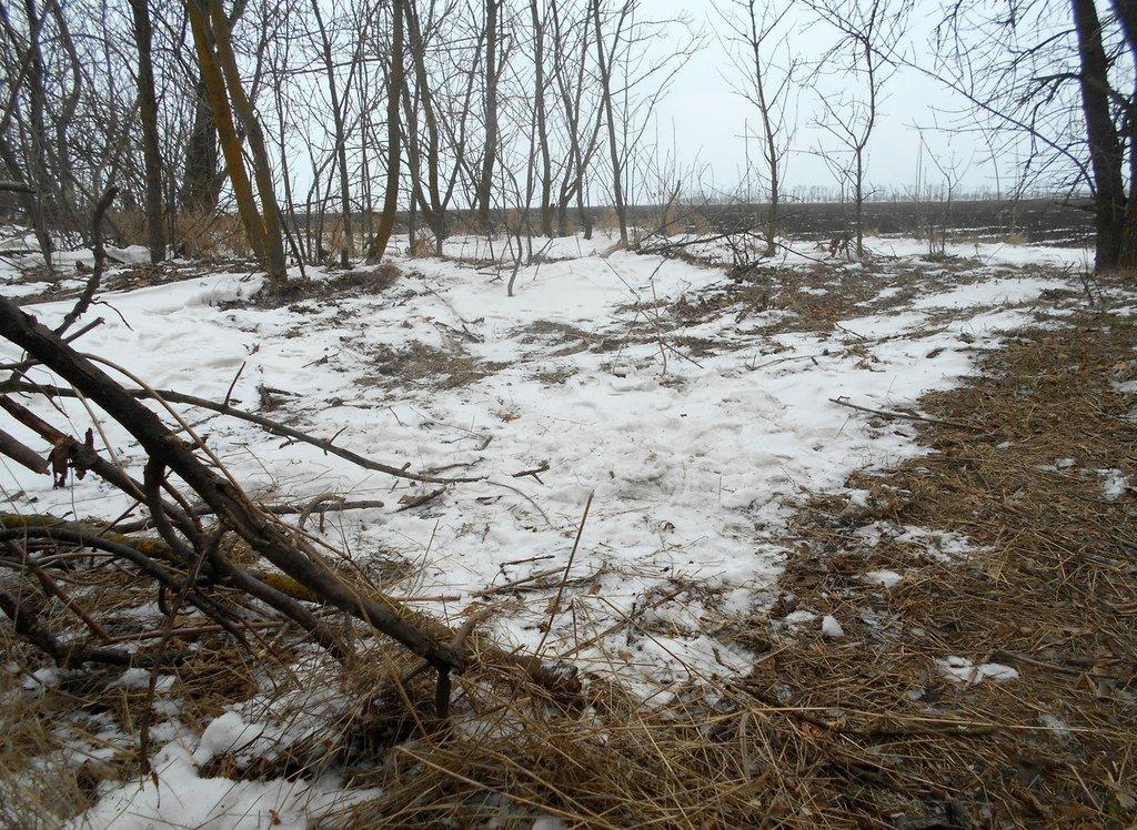 Из леса к морю, февраль, в походе, лёд, снег... 004. 001