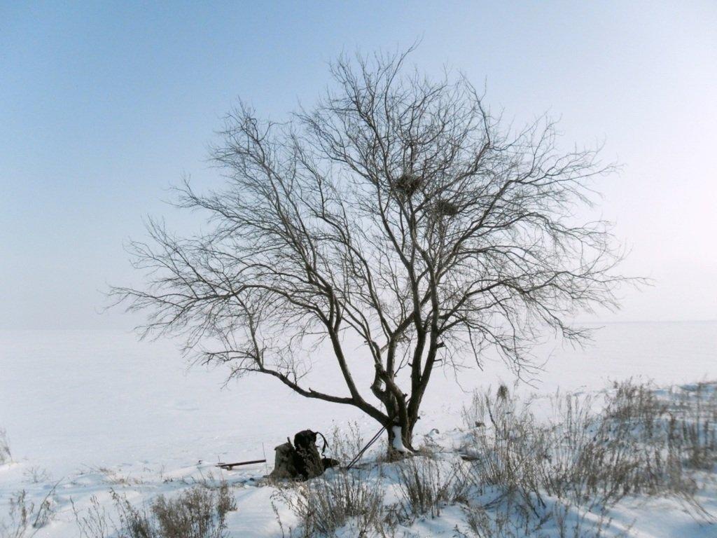С рюкзаком, море заснеженное, на косу Ачуевскую... 002. 006