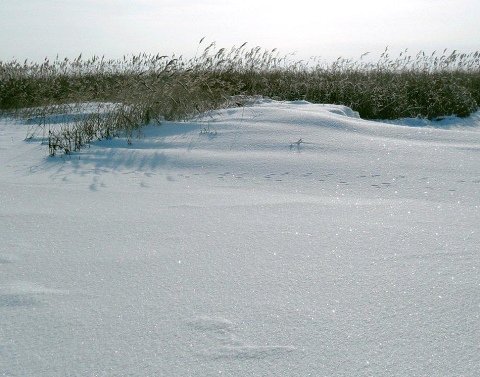 У косы Ачуевской, Зима, снег, Азовское побережье... 003. 012