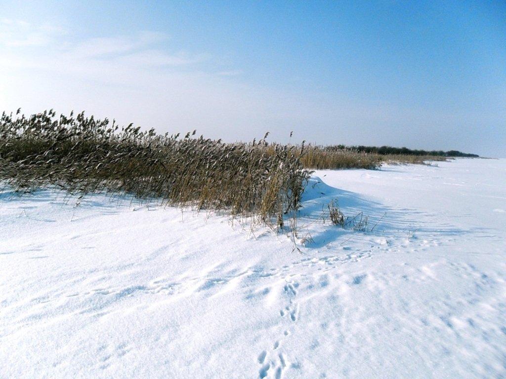 У косы Ачуевской, Зима, снег, Азовское побережье... 003. 009