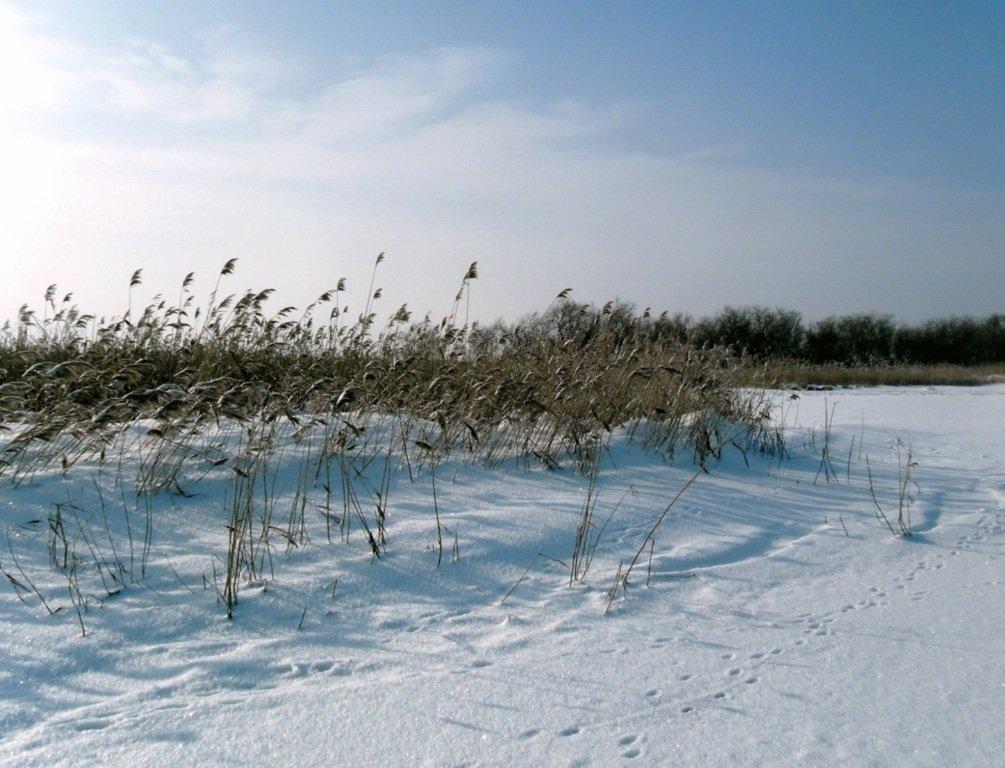 В зимней сказке, на косе Ачуевской, февраль, туризм...004. 001