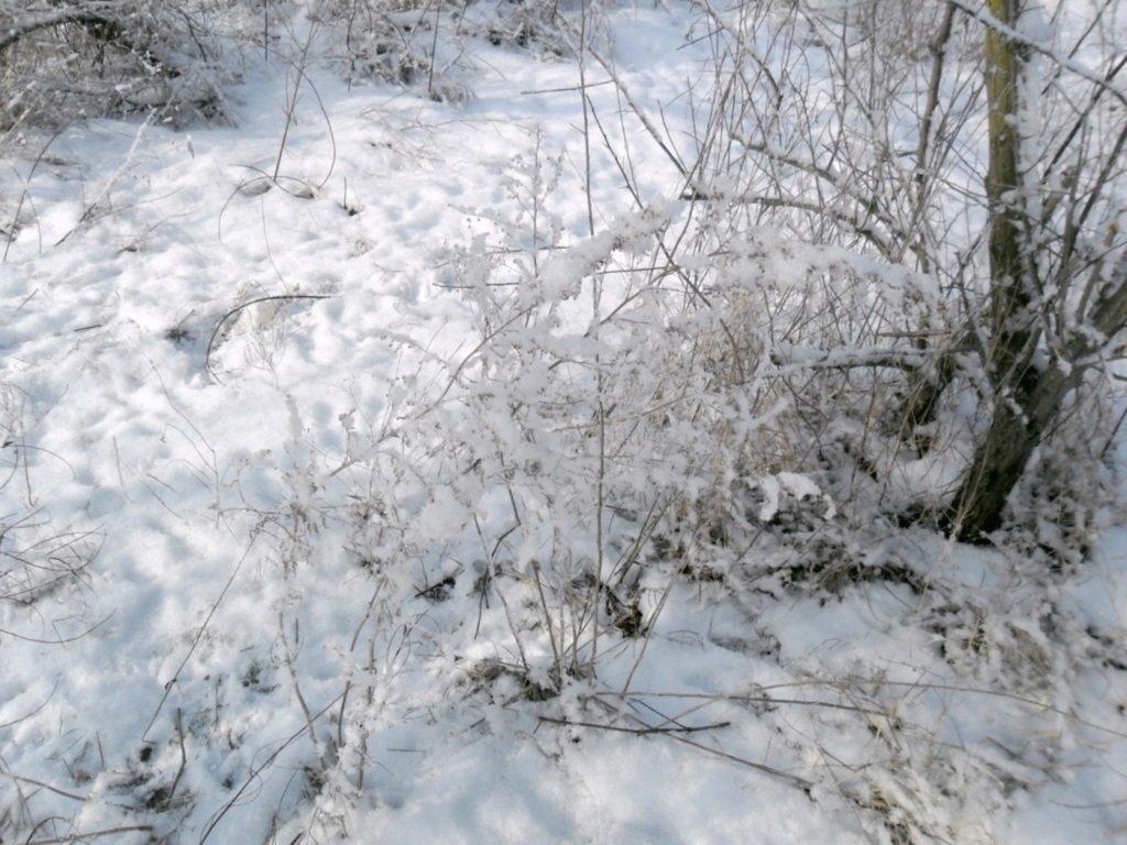 В зимней сказке, на косе Ачуевской, февраль, туризм...004. 009