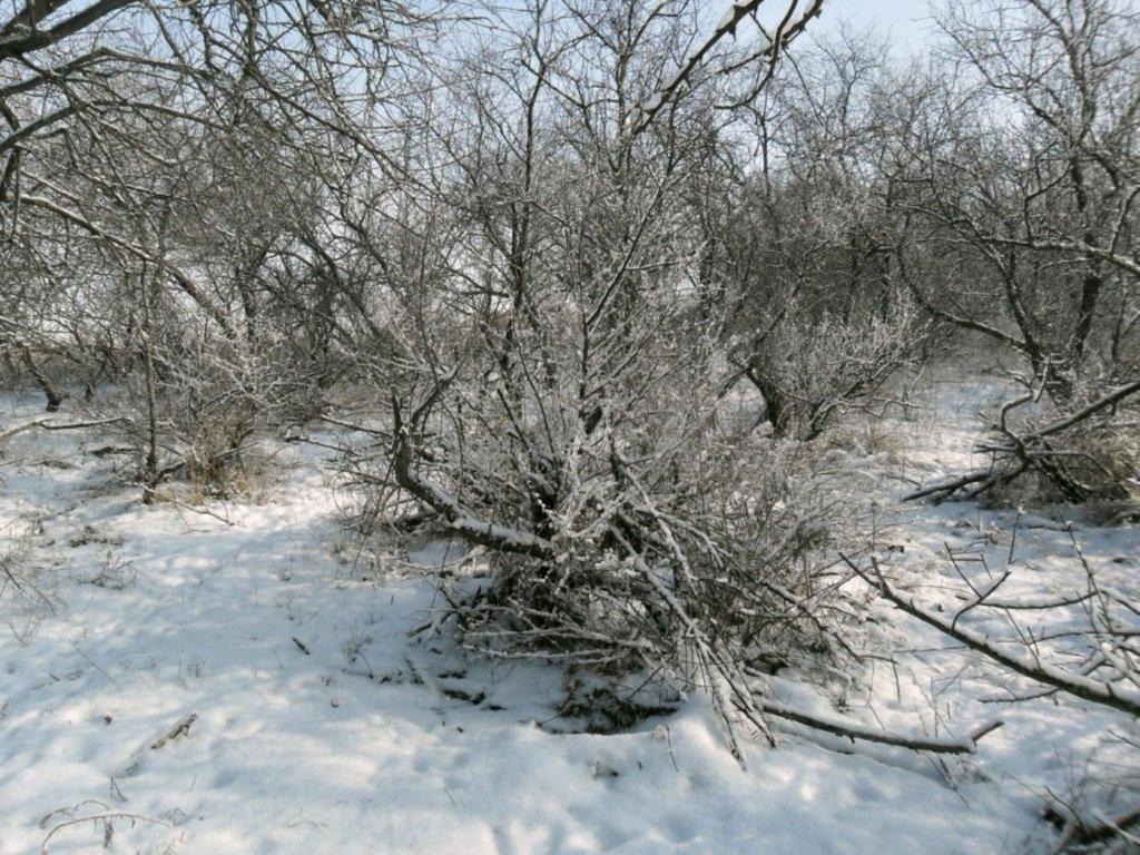 В зимней сказке, на косе Ачуевской, февраль, туризм...004. 011