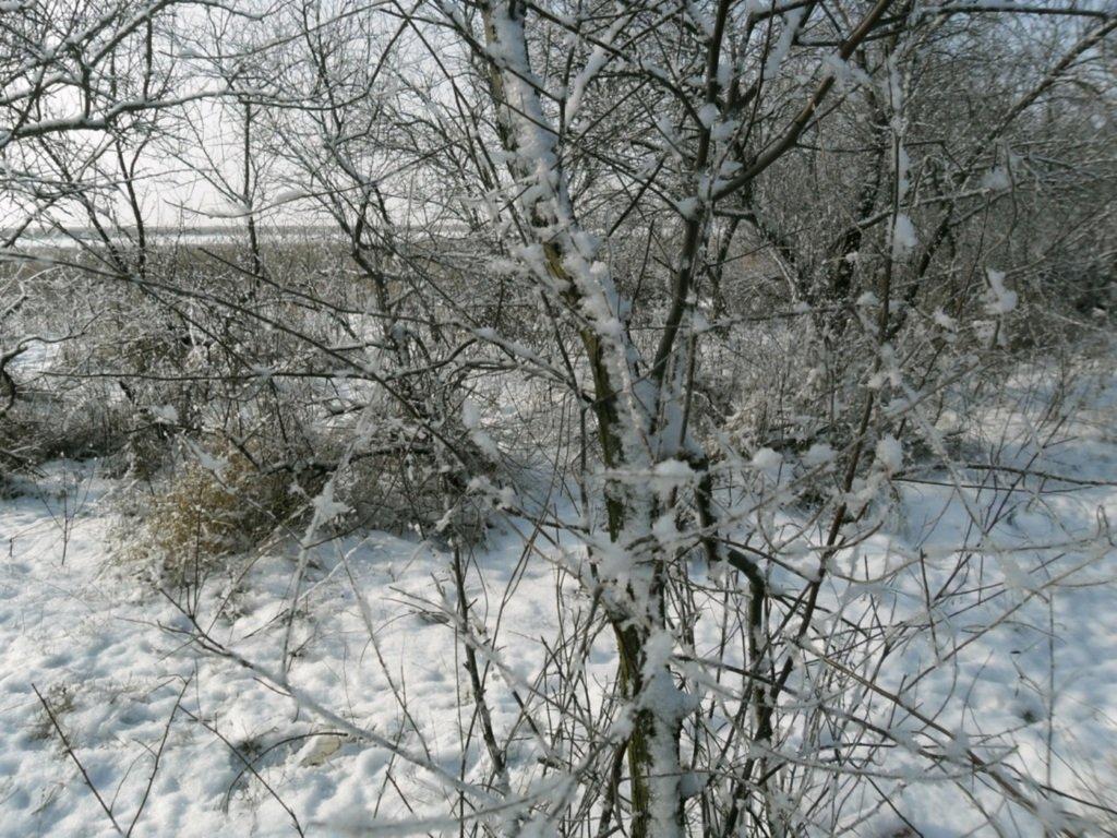 В зимней сказке, на косе Ачуевской, февраль, туризм...004. 008