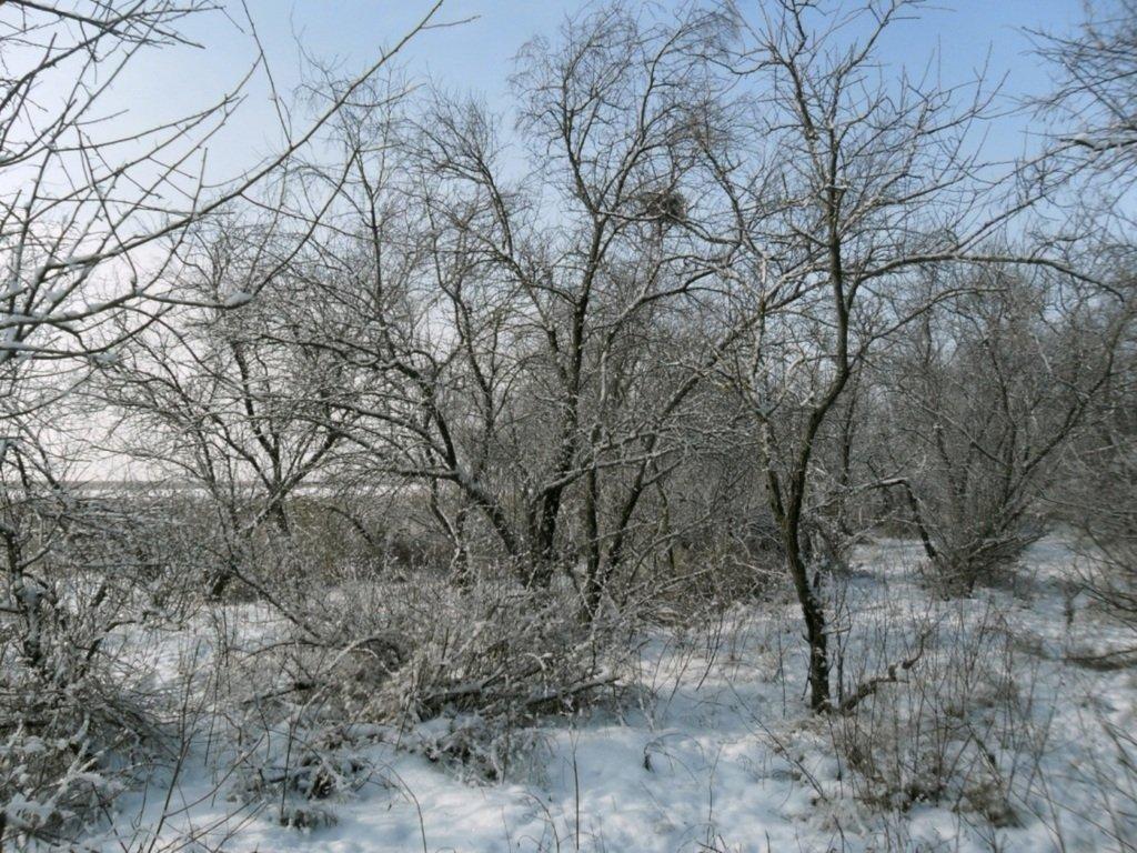 В зимней сказке, на косе Ачуевской, февраль, туризм...004. 007