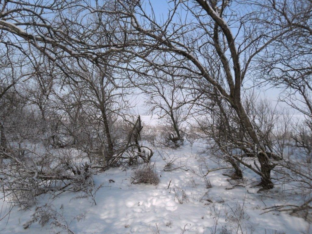 В походе снежном, Азовское побережье, февраль... 005. 003