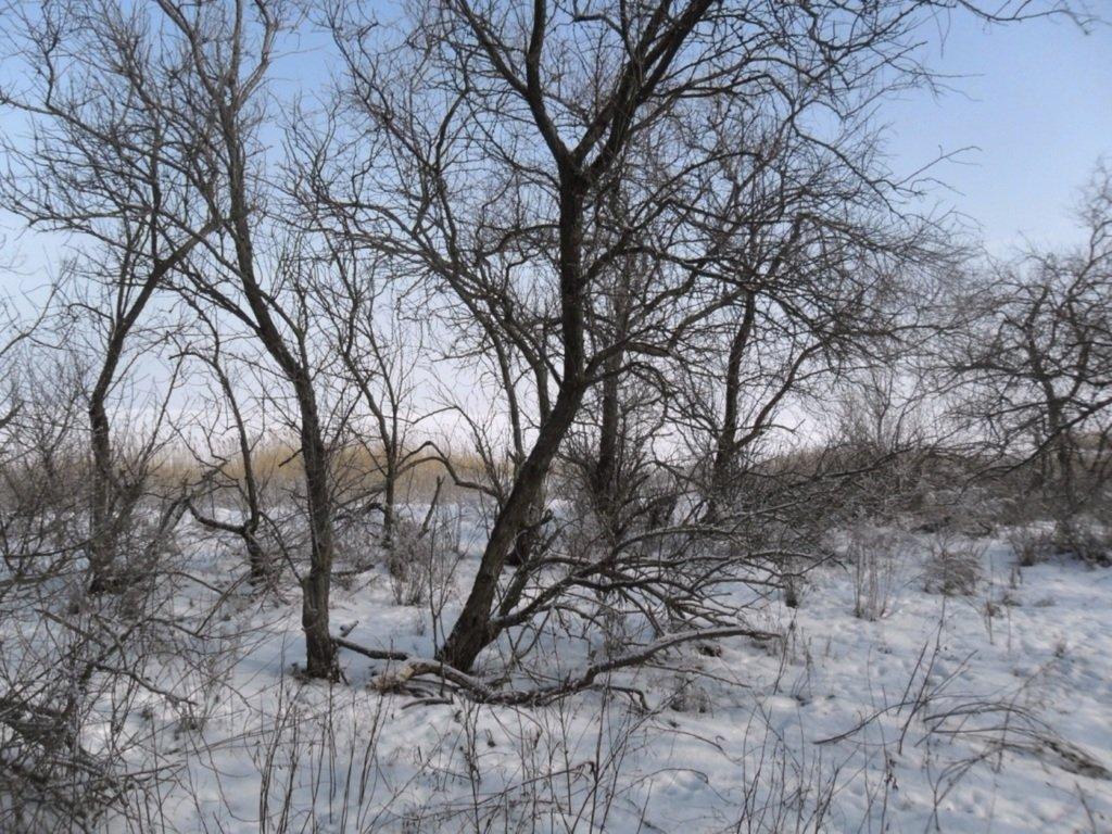 В походе снежном, Азовское побережье, февраль... 005. 002