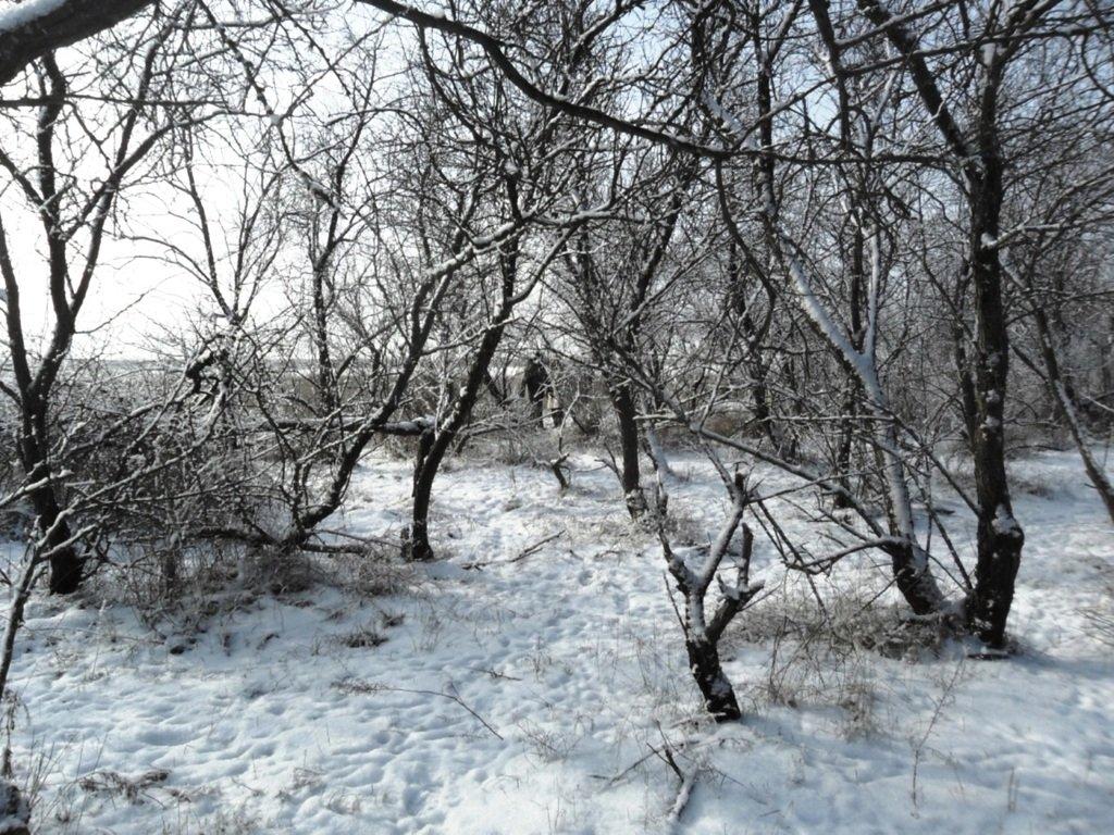В походе снежном, Азовское побережье, февраль... 005. 004