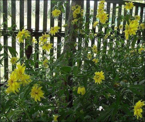 Деревенские цветы