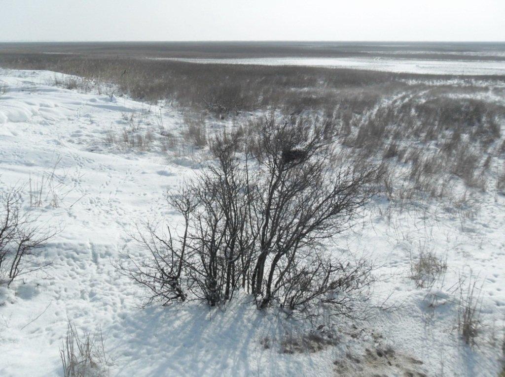 В снегах, путешествие, Ачуевская коса, Азовское море, февраль... 006. 010