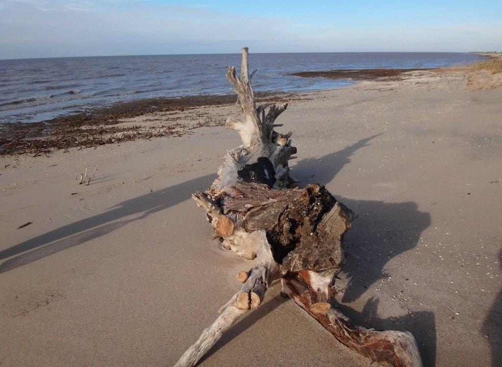 У моря Азовского, в походе, декабрь, ... и слоники... 002. 002
