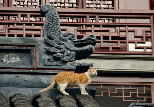 Кошка и дракошка