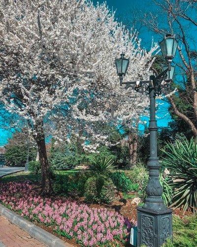 В Севастополе все цветет.