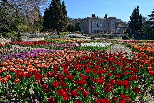 Парад тюльпанов в Ялте.