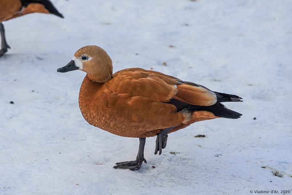 Озябла, милая, на снегу-то сидеть?!