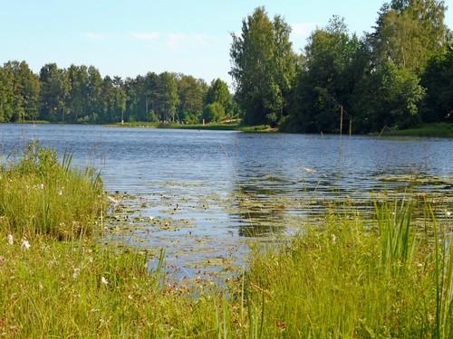 Лето, озеро, жара