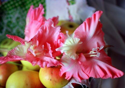 Гладиолус с яблоками.