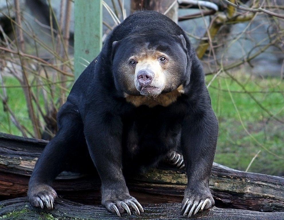 политики, виды медведей фото экзотических довольно большой раздел