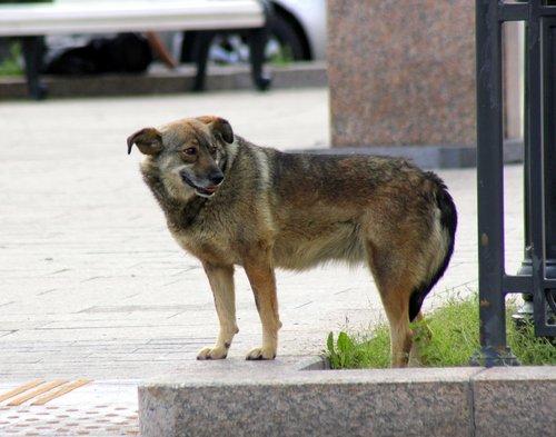 Пес,свободно-гуляющий по центру города!