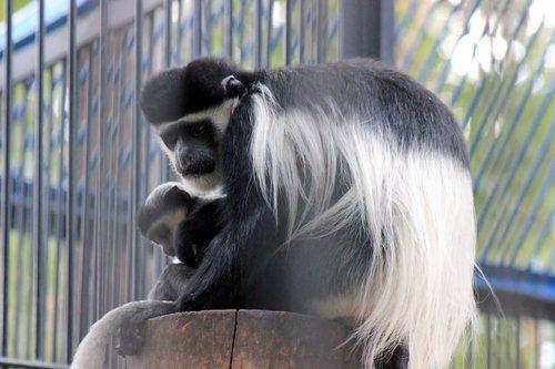 Итоги тематического конкурса «Идем в зоопарк»