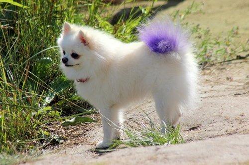 С фиолетовым хвостиком!