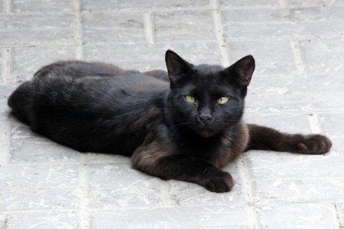 Только черному коту и не везет...
