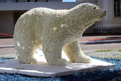Белый медведь из белых хризантем.