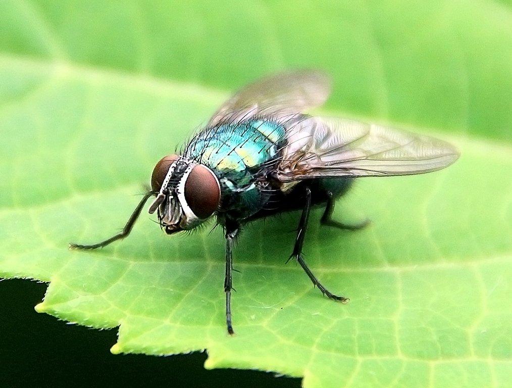 Какие бывают мухи фото