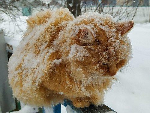 Мокрый снег - моё убранство