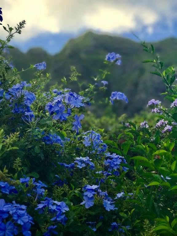 Островок Китайская Шляпа и Куалоа-парк на гавайском острове Оаху