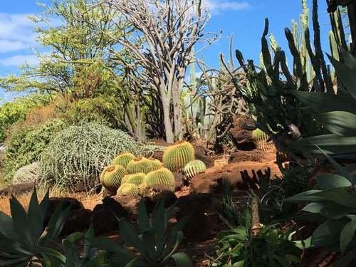 Кактусы Гавайских островов