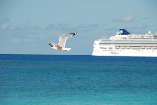 Атлантика. Ленивый полёт сытой чайки.