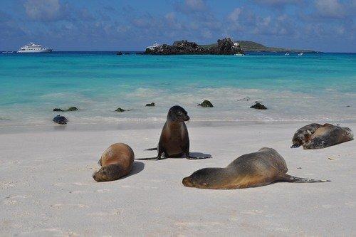 Полдень. На диком пляже Галапагоса.