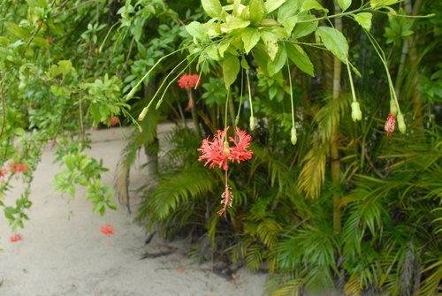 Это растёт зимой в Гондурасе