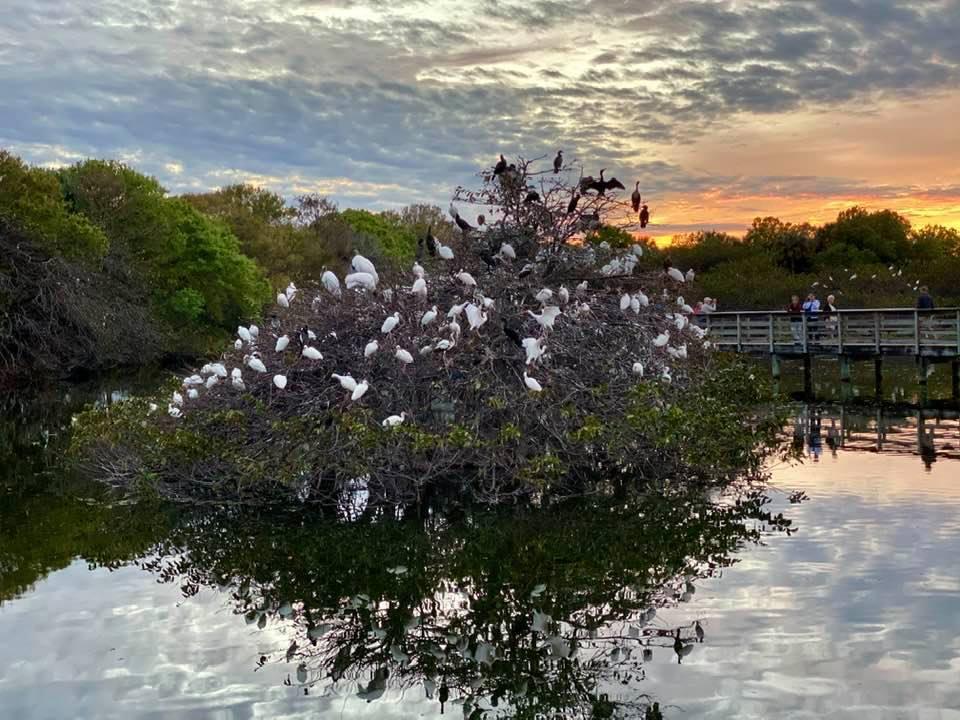 Флорида. Царство ибисов и их друзей в Делрей-Бич.