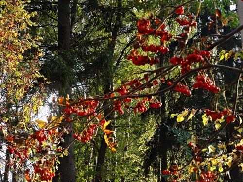 Осенний этюд.
