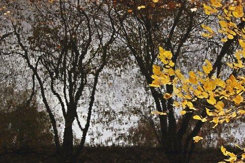Осенний сюжет.