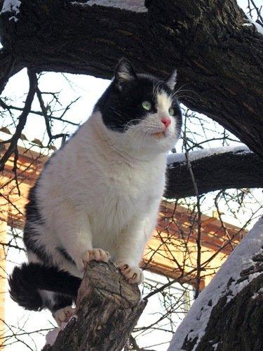 Памяти любимого кота Куршевеля. 4.03.2007 - 17. 03. 2019 гг.