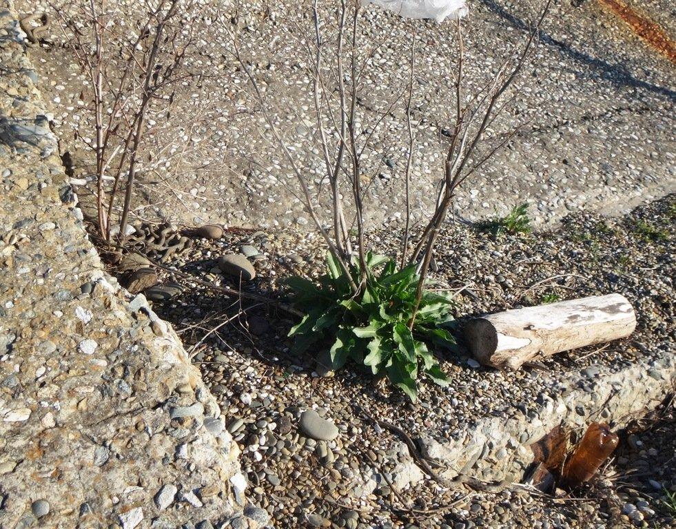 Встреча на Природе, на графских развалинах, в пятницу, 13-03-20...007