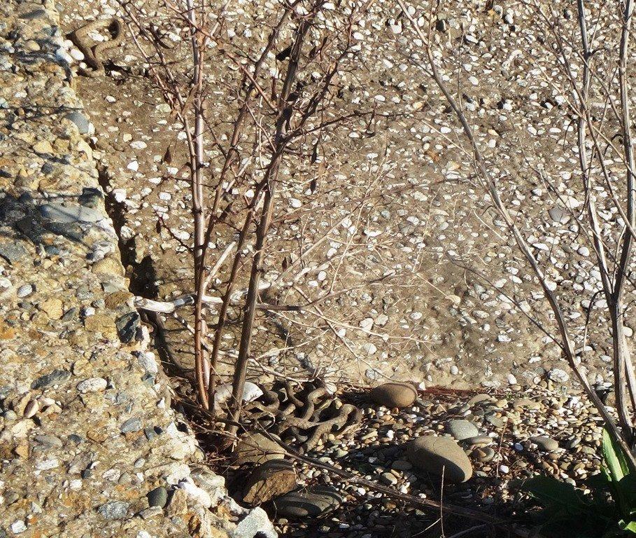 Встреча на Природе, на графских развалинах, в пятницу, 13-03-20...005