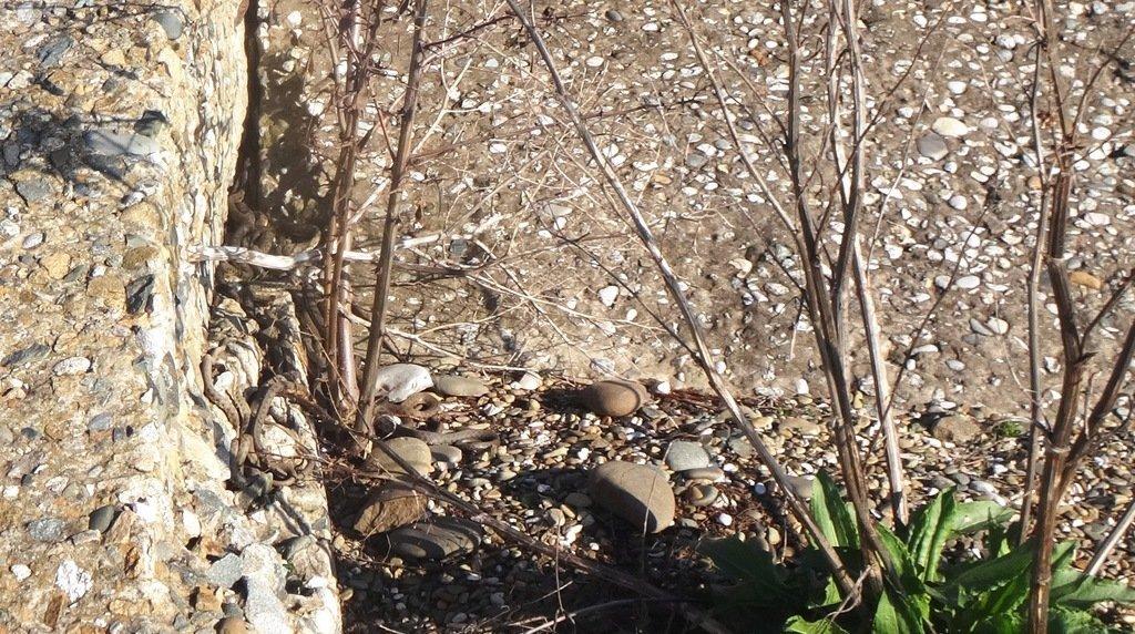 Встреча на Природе, на графских развалинах, в пятницу, 13-03-20...001