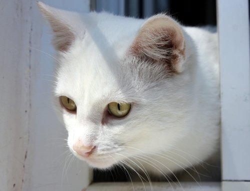 Белый котик на окошке.