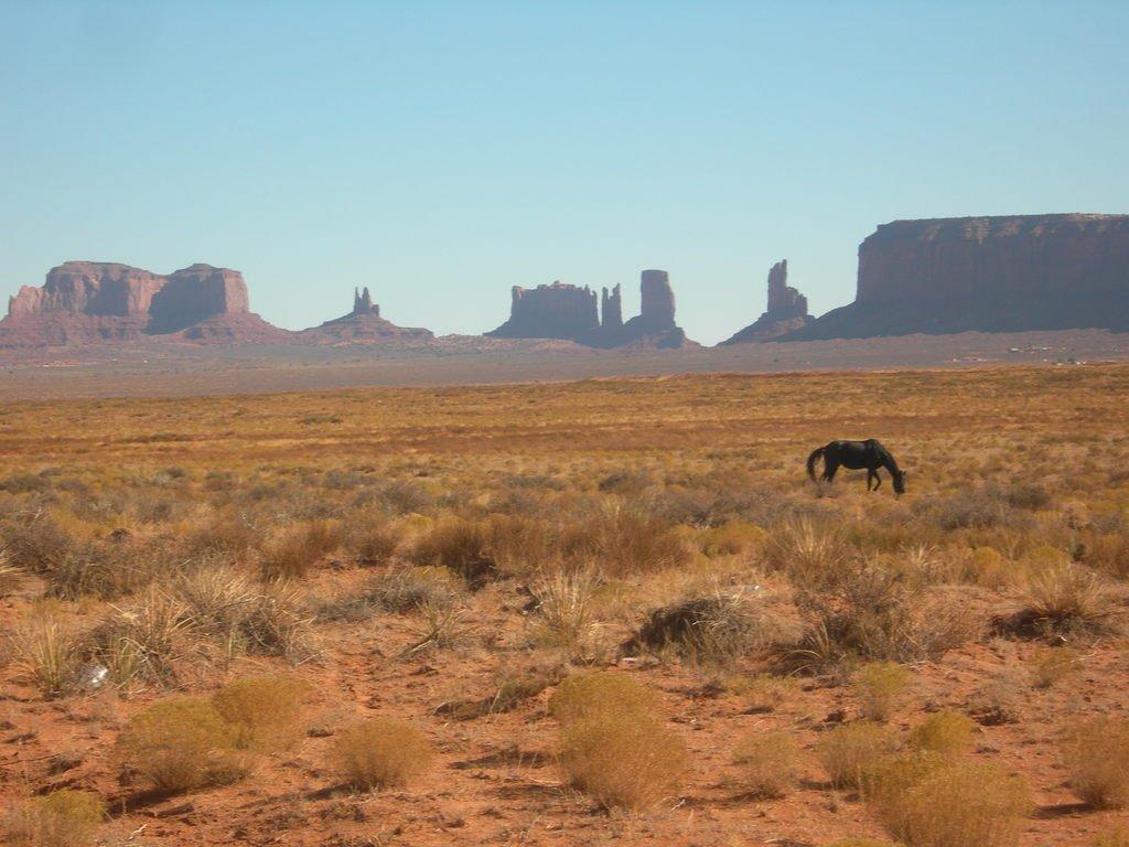 Одинокая лошадь в Долине Монументов.