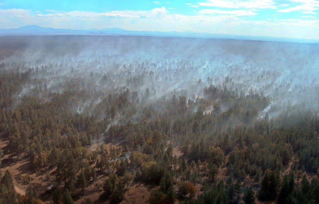 Гранд-каньон. Лесной пожар на плато Колорадо.