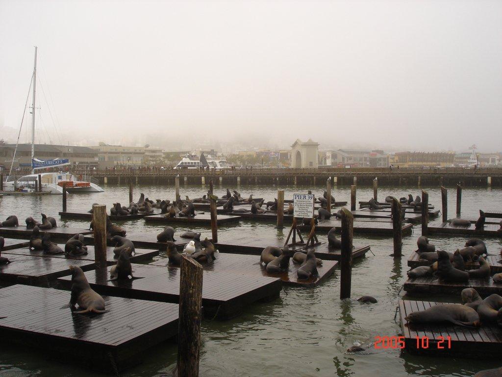 Сан-Франциско. Морские львы на 39 пирсе...