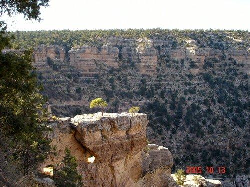 Гранд-каньон. Дерево на дырявом камне.