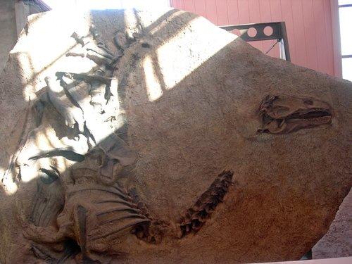 Вы никогда не видели динозавров? Смотрите!